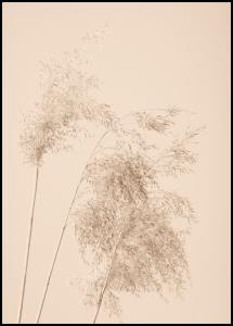 Reed Grass Poster