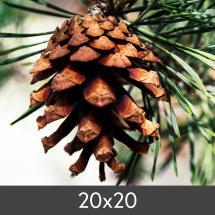 Vergrößerung FineArt Bamboo 290 g