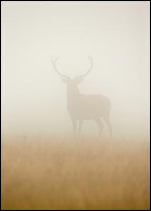 Ghost Stag Poster