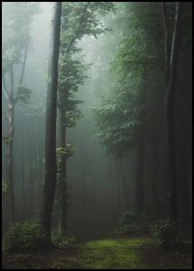 Mysterious forest Poster