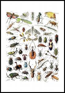 Schule Insekten II Poster