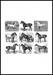 Pferderassen Poster