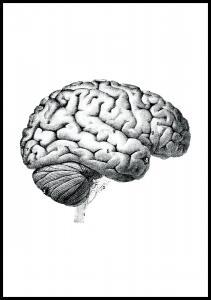 Schule Gehirn Poster