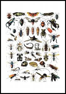 Schule Insekten I Poster