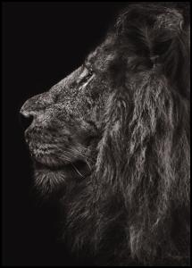 Lion In Profile Poster