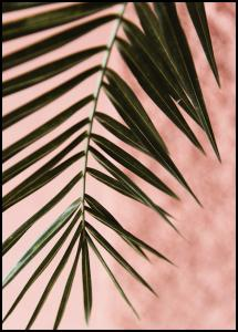 Pink pastell palm Poster