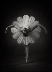 Floral Ballet Poster