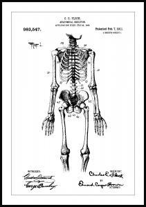 Patentzeichnung - Anatomisches Skelett I Poster