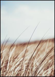 Dreamy Grass Poster